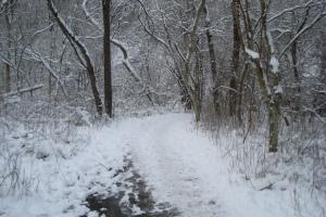 2012 trail