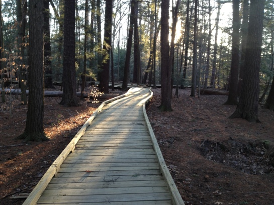 'Boardwalk in the woods' - approx. a qtr. mile long.