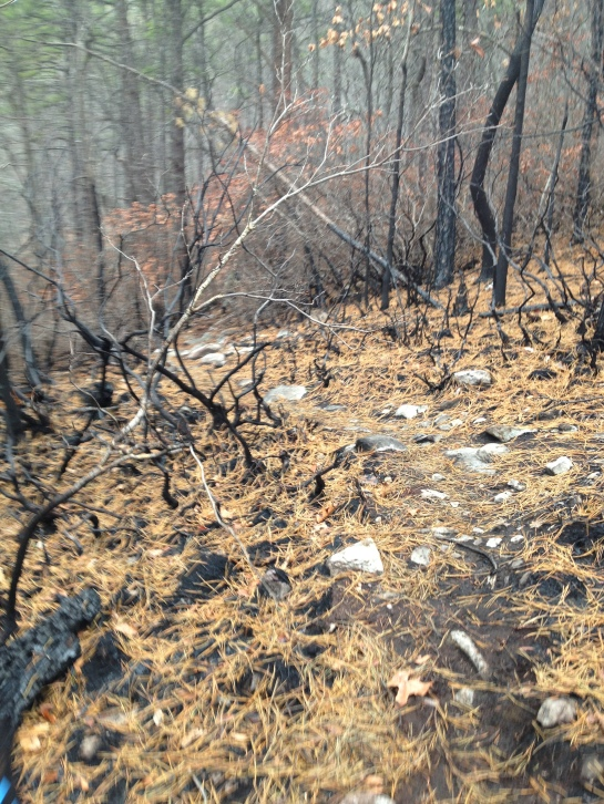 Charred evidence of the November 2012 fire that burned 675 acres of the mountain